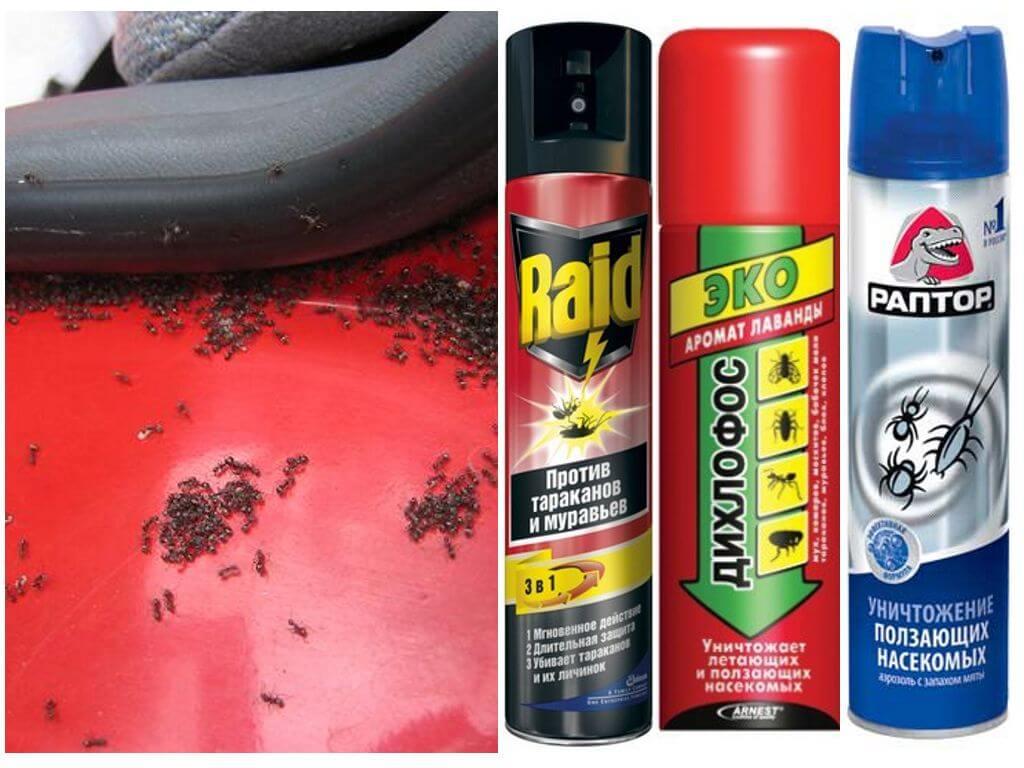 Jak dostat mravence z auta