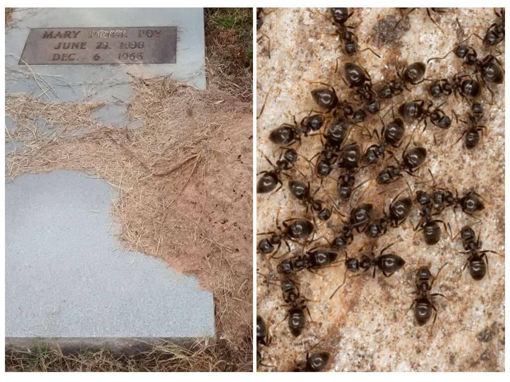 Jak se zbavit mravenců na hrobě