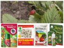 Opravné prostředky pro mravence na jahodách